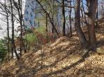 2016타경102260 - 안양지원 [임야] 경기도 안양시 만안구 안양동 973-105 - 부동산미래